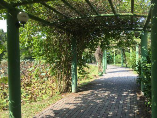 台北 植物園
