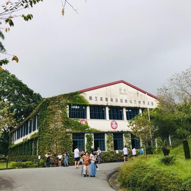 日月潭 老茶廠