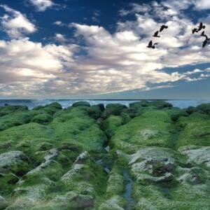 北海岸 景點 |在陽明山遊玩之後到淡水住宿 ~ 一起去兜風!