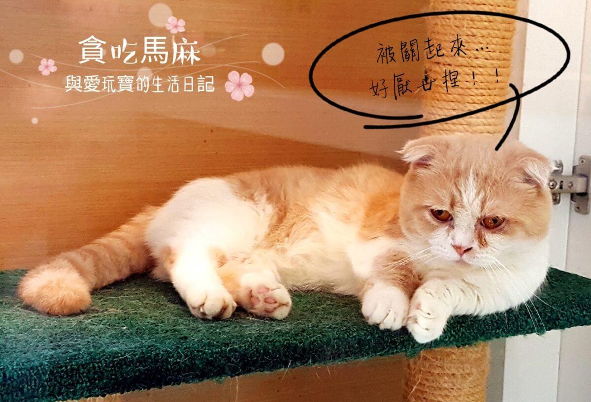 猫森 咖啡 nekomoricafe | 桃園楊梅可以跟貓咪互動的咖啡廳