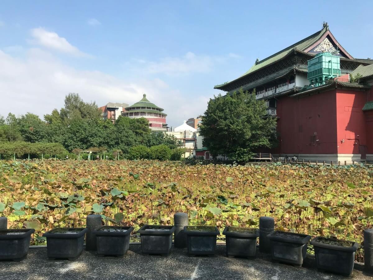 台北植物園 | 台北人も忘れてるけど悪くないよ!【台北 観光 穴場】