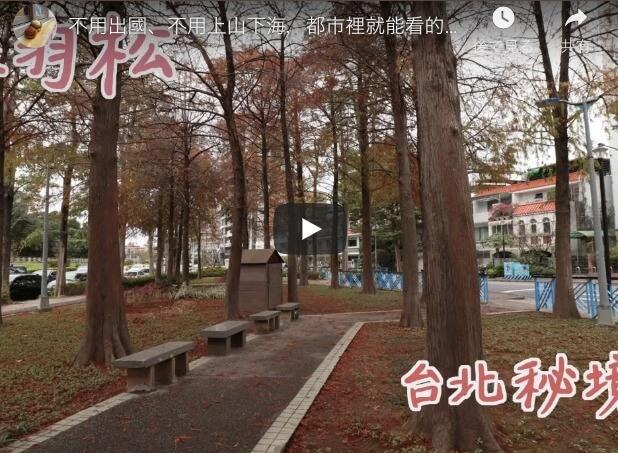 士林で見られる落羽松 | 台北の秘境を訪れる【栗思半日遊】
